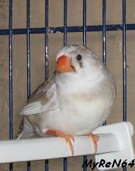 femelle brune panachée